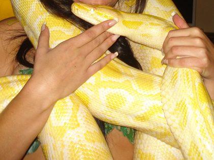 Espetáculo de striptease com cobra